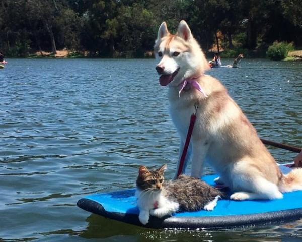 Rosie e Lilo na Califórnia: a gata se recuperou do abandono nas ruas apenas depois de conhecer a cadela (Foto: Reprodução/Facebook)