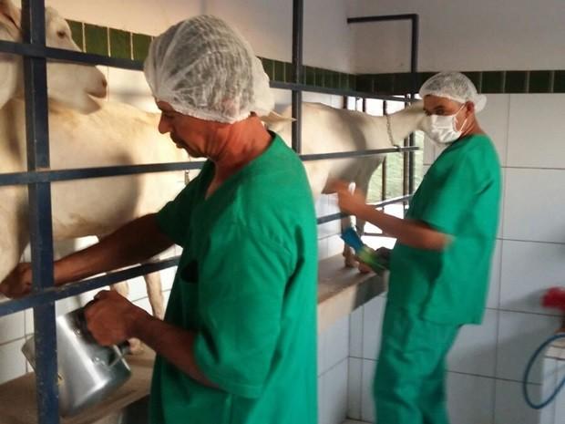 Produtores estão investindo no leite de cabra para fugir da seca e da crise econômica (Foto: Aparecida Nóbrega / Arquivo Pessoal)