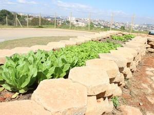 Horta é aberta será aberta ao público (Foto: Divulgação)