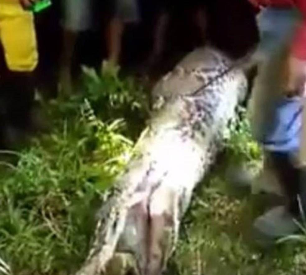 Especialistas acreditam que essa é a primeira vez em que existem evidências confiáveis, como o vídeo, de que uma píton-reticulada devorou um adulto humano (Foto: Polícia de Sulawesi Ocidental)