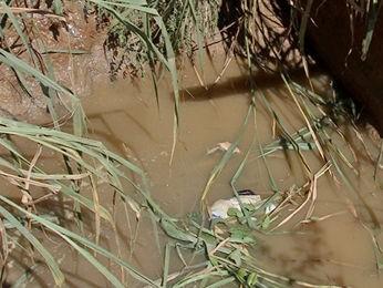 IML diz que idosa morreu por afogamento após cair em fossa (Foto: Reprodução/TVCA)