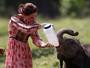 Kate Middleton alimenta filhotes de elefante e rinoceronte na Índia