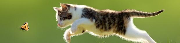 Universidade desenvolve projeto para combater o abandono de animais  (editar título)