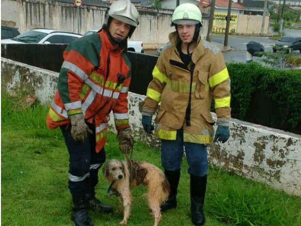 Equipe salvou cachorro após 40 minutos de trabalho (Foto: Divulgação/Defesa Civil e GBCV)