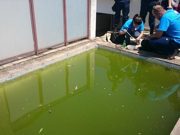 Piscina abandonada era risco para proliferação de aedes aegypti (Foto: Divulgação)