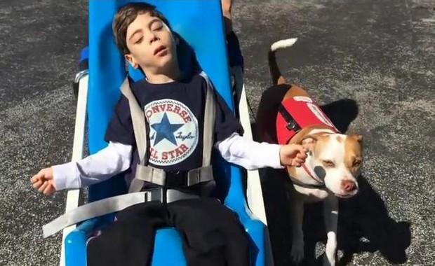 Menino com paralisia cerebral é autorizado pela justiça a ter a companhia de seu pitbull na escola (Foto: Reprodução - Youtube)