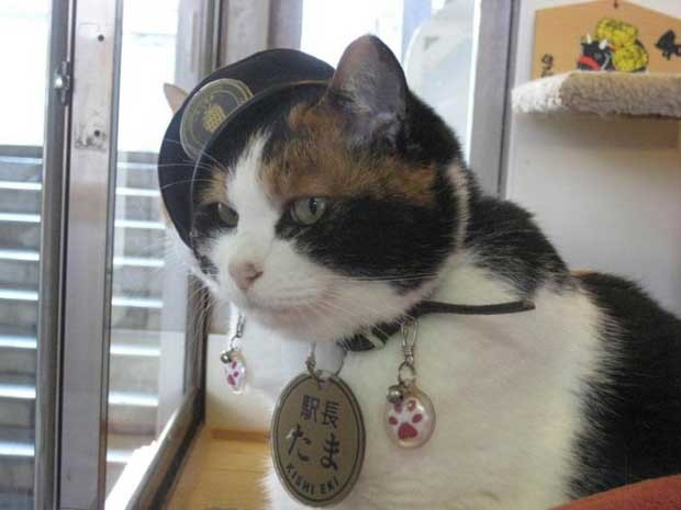 Tama atrai visitantes para a ferrovia japonesa (Foto: Reprodução/Facebook/Super Station Master Tama)