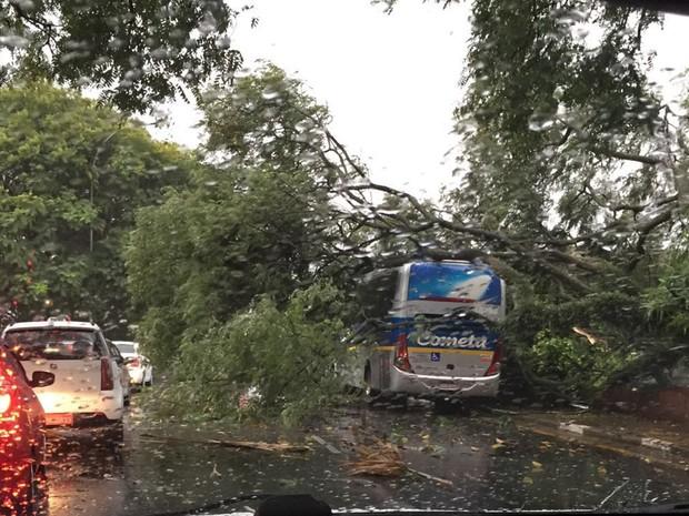 Internauta flagrou árvore caída sobre ônibus na região do Aeroporto de Congonhas, Zona Sul de São Paulo (Foto: Fernando Paes de Barros/VC no G1)