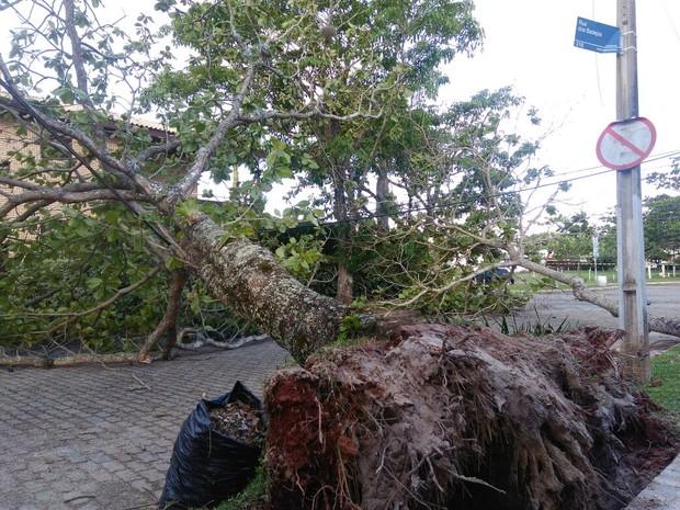Árvores caíram sobre fiação elétrica e interditaram rua em Jurerê Internacional, em Florianópolis (Foto: Fernanda Burigo/G1)
