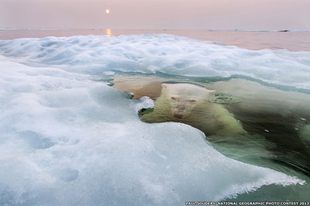 Esta incrível imagem de um urso polar emergindo do mar congelado na baía de Hudson, do fotógrafo Paul Souders, ganhou o prêmio principal no concurso de fotos deste ano da National Geographic.  (Foto: Paul Souders/National Geographic Photo Contest 2013)