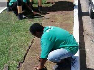 Equipes da Sedurb estão repondo gramas e mudas de plantas nas áreas em que se registrou os roubos (Foto: Sedurb/Arquivo)