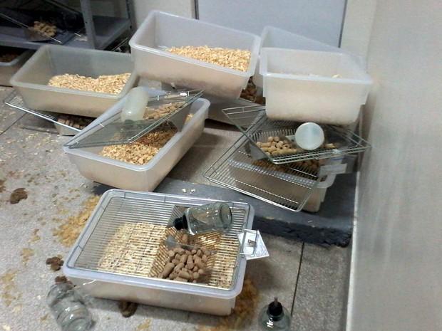 Invasores deixaram muita bagunça na retirada dos ratos (Foto: Elisângela Marques/ G1)