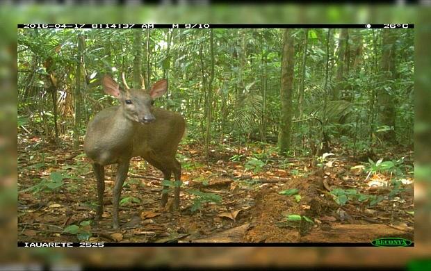 Série 'No Rastro da Onça' mostra fauna do Parque Nacional dos Campos Amazônicos (Foto: Rondônia TV)