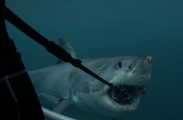 Tubarão mordeu equipamento com seis câmeras acopladas (Foto: Reprodução/YouTube/ 360Heros)