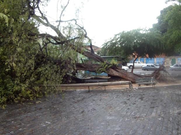 Chuva de 93 mm causa queda de árvores e acidentes em Fortaleza (Foto: Narcélio Bezerra/TV Verdes Mares)