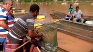 Produtores de tilápia fazem parceria com hidrelétrica e passam a pescar em lago de Itapebi