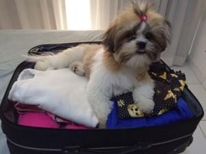 Jujuba já está acostumada com as viagens da família (Foto: Bruna Dias Mendonça/Arquivo Pessoal)