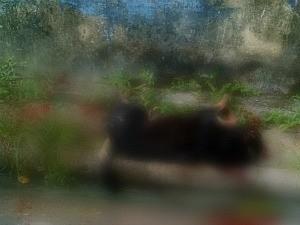 Cachorro foi morto a tiros na rua (Foto: Arquivo pessoal)