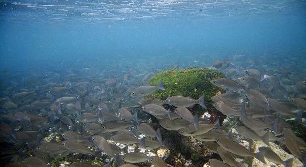 As Ilhas Galápagos formam o arquipélago mais diverso e complexo do mundo. As espécies de plantas e animais típicos das ilhas não tinham predadores durante milhares de anos, razão pela qual os animais não demonstram qualquer medo com a presença humana . É também o destino mais importante de mergulho no mundo  (Foto: BBC)