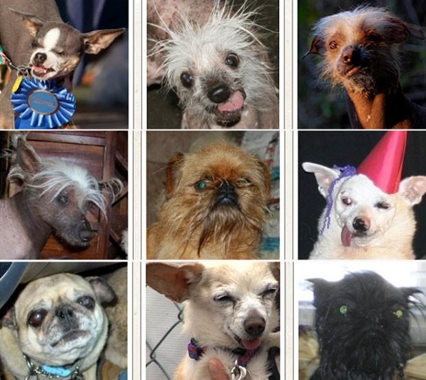 A partir da esquerda e de cima para baixo, Princess Abby, Rascal, Icky, Spam-o-Rama, Sputnick, Ratdog, Kaiya, Addie e Monkey (Foto: Divulgação/World's Ugliest Dog)