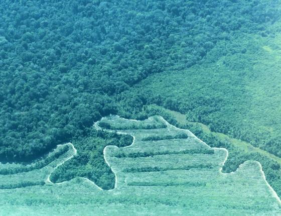 Área de floresta na Amazônia (Foto: Alex Lees)