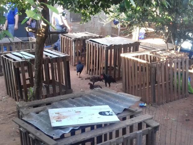 Animais foram encontrados em um imóvel da Vila Dutra, em Bauru (Foto: Polícia Militar/Divulgação)
