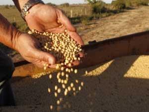 Quebra da safra de soja castigou o Paraguai (Foto: Reuters)