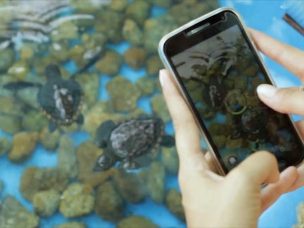 App vai ajudar na proteção de tartarugas marinhas (Foto: Reprodução/ TV Gazeta)