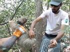 Bicho-preguiça é solto em reserva ambiental de Cabo Frio, no RJ
