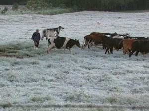 Cenário ficou dominado pelo gelo dos orvalhos congelados em Divinolandia (Foto: Eder Ribeiro/EPTV)