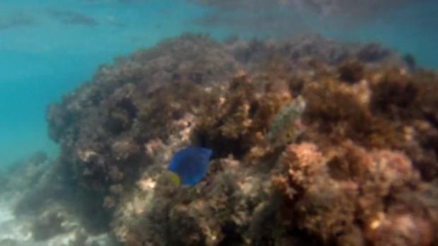 Programa Terra da Gente mostra um mergulho na vida marinha no litoral de Alagoas (Foto: Reprodução)