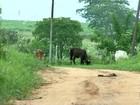 Onda de roubos preocupa moradores da área rural no noroeste paulista