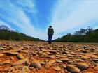Rio Paracatu agoniza em Minas Gerais por causa da estiagem