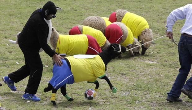 Cidade colombiana de Nobsa promoveu jogo de futebol entre ovelhas (Foto: Javier Galeano/AP)