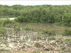 Acúmulo de lixo prejudica áreas de manguezais no Maranhão