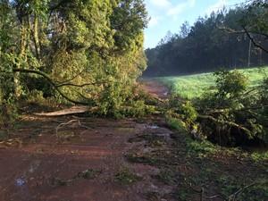 Temporal em Tapejara, na Região Norte do Rio Grande do Sul, provoca a queda de árvores e bloqueia estradas (Foto: Divulgação)