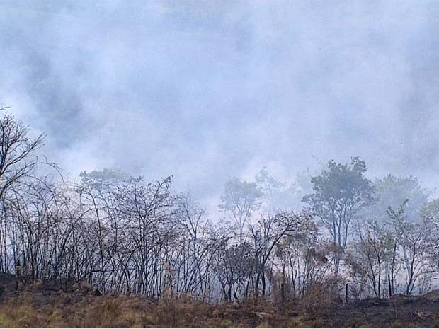 Fogo se alastrou por 10 hectares em área de preservação ambiental e propriedades rurais de Taquaritinga (SP) (Foto: Chico Escolano/EPTV)