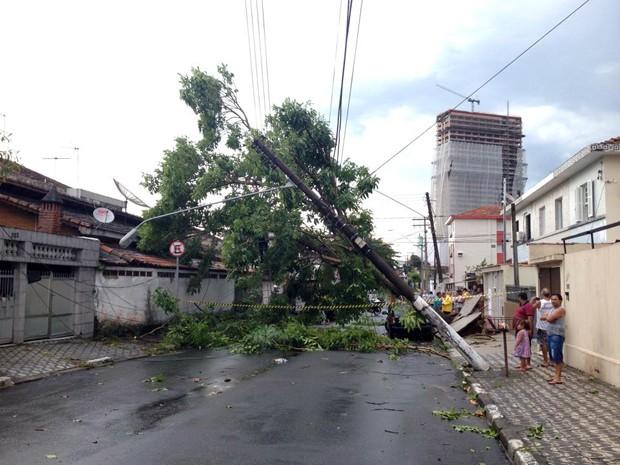 Várias árvores caíram nas cidades do litoral de SP durante a tempestade (Foto: Luis Paes/G1)