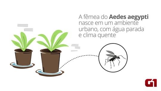 Número de casos de zika, dengue e chikungunya caem em 2017
