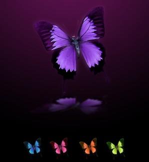 ícones de borboleta