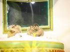Borat, de 'Amor e Sexo', encena 'orgia' em carro alegórico na Sapucaí