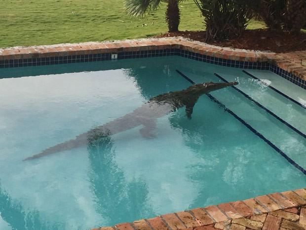 Americano levou susto ao encontrar um crocodilo na piscina de sua casa (Foto: David Carey/Monroe County Sheriff's Office/AP)