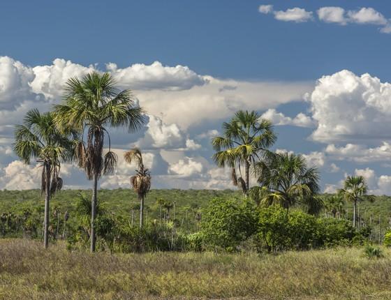 Região do Mosaico de Áreas Protegidas Sertão Veredas Peruaçu, em Minas Gerais, no Cerrado brasileiro (Foto: André Dib/WWF-Brasil)