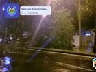 Chuva alaga ruas, derruba árvores e deixa bairros sem energia em S. José