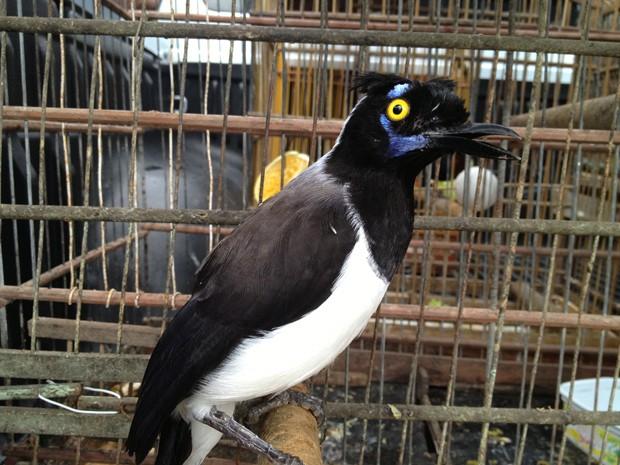 Aves silvestres eram criadas como domésticas (Foto: Walter Paparazzo/G1)