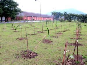 Mais de 1000 mudas já foram plantadas em área da usina de Cubatão, SP (Foto: Mariane Rossi/G1)