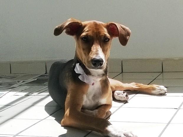 Pipa foi adotada em Macaé (Foto: Júnior Costa/G1)