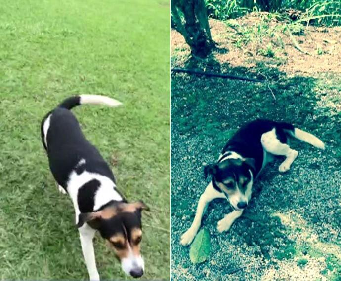 Conheça Rafa, o cachorrinho vira-lata de Cissa Guimarães (Foto: Mais Você/TV Globo)