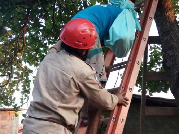 Homem deslocou o braço durante poda (Foto: Bombeiros/Divulgação)