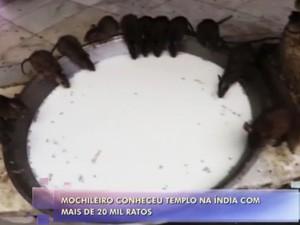 Templo dos Ratos (Foto: TV Globo)